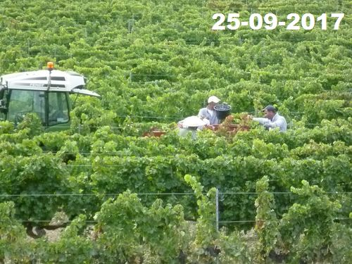 Hand harvesting of ripe and healthy fruit from 22 to 26 September.